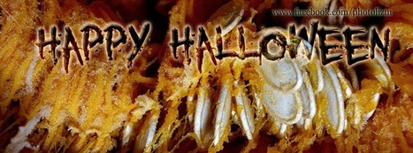 Happy Halloween!  Have a Banner | Photography For All | Scoop.it