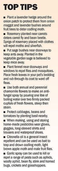 Use herbs to protect other plants-great gardening tips! | Garden Ideas by Team Pendley | Scoop.it