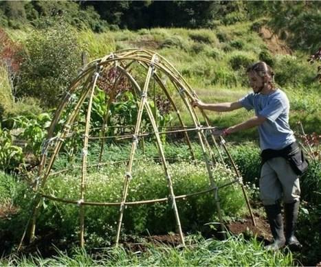 Agricultura orgánica podría dejar de ser una utopía - Teletica | Cultivos Hidropónicos | Scoop.it
