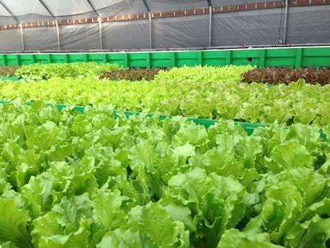 In Wake of Recession, Two Food Evangelists in Search of Sustainable Business Launch Aquaponic Farm | Sustain Our Earth | Scoop.it