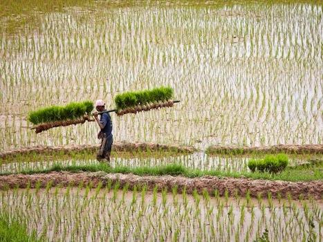 Indonésie : à la rencontre du peuple Toraja sur l'île de Sulawesi | Envie d'évasion et de voyage? | Scoop.it