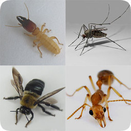 Pest of West Palm Beach Florida | Pest Control Service | Pest control West Palm Beach Florida | Scoop.it