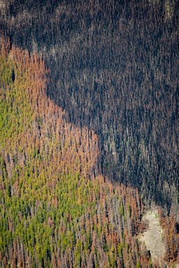 "From Pine Beetles to Disappearing Glaciers, NASA Scientists Tell of ""Dramatic"" Planetary Changes 