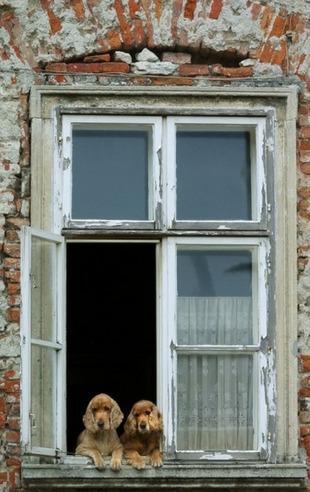 Remplacement des fenêtres : menuiseries neuves ou rénovation? | La Revue de Technitoit | Scoop.it
