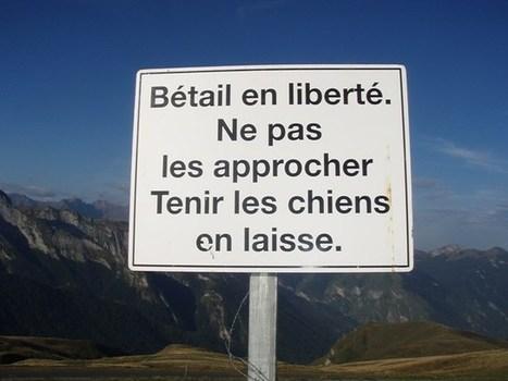 Pyrénées : encore un accident avec des vaches en montagne - kairn.com   Les pyrénées   Scoop.it