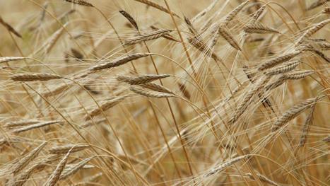 « Le libre-échange peut répondre aux effets du réchauffement climatique sur l'agriculture » - Euractiv.fr | Agriculture et Alimentation méditerranéenne durable | Scoop.it