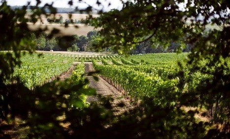 Vin : L'IVBD, une interprofession commune pour les vins de Duras et de Bergerac | Agriculture Aquitaine | Scoop.it