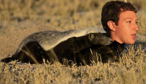 Facebook: the Honey Badger of Social Media | Information Technologies and Political Rights | Scoop.it