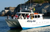 Whale Watching Wildlife Eco-Tour: 5-Hours from San Francisco | Eco Friendly Vacations | Scoop.it