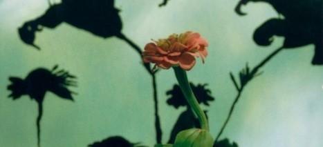 Cuarenta años de experimentos artísticos con fotos Polaroid - 20minutos.es | Fotografía | Scoop.it