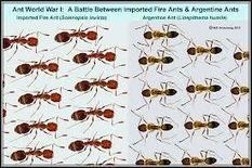 Do the ants are transparent or similar? | onlinepetanswers | Scoop.it