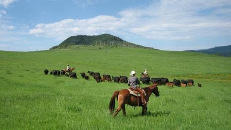 Colorado Dude Ranches -Dude Ranches in Colorado | Colorado.com | Dude Ranch Vacations | Scoop.it