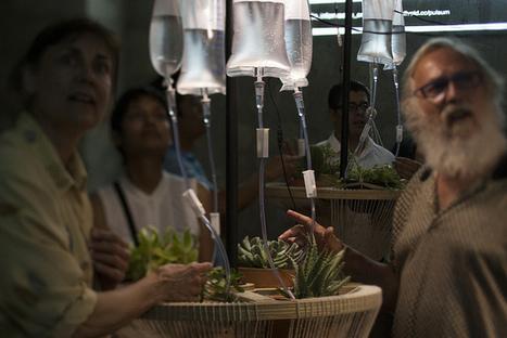 Pulsum Plantae by  Leslie García. | Arte y Cultura en circulación | Scoop.it