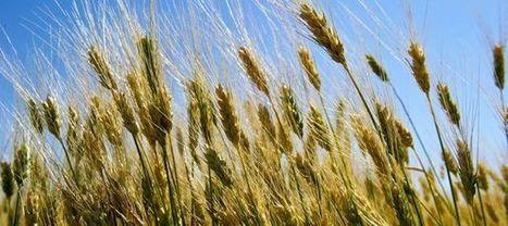 Le top 5 des régions les plus bio | Agriculture et jardinage biologique | Scoop.it
