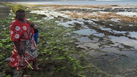 La culture des algues marines et l'interdiction de la pêche à l'explosif peuvent préserver les moyens de subsistance en Tanzanie | Valorisation des algues | Scoop.it