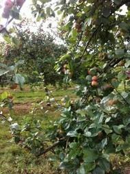 Les cidriers bretons se mobilisent pour l'environnement   Terre de Cidre   Patrimoine Végétal et Biodiversité   Scoop.it
