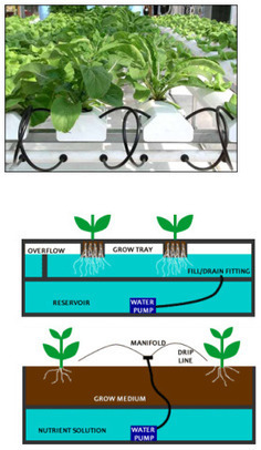 Is Hydroponic Gardening A Viable Alternative » Sustainable ... | Vertical Farm - Food Factory | Scoop.it