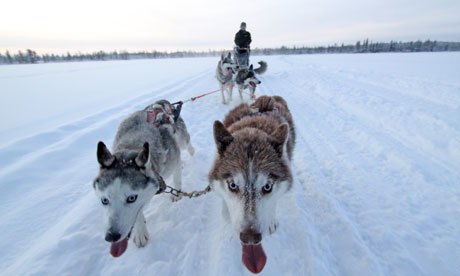 Husky sledding in the Arctic with Dior and Armani | Finland | Scoop.it