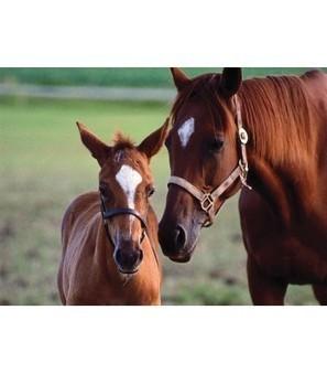 0060 Pc Mare & Foal Cardboard Jigsaw   Online Store   Scoop.it