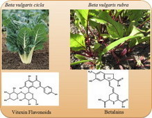 Nutritional and functional potential of Beta vulgaris cicla and rubra | plant cell genetics | Scoop.it