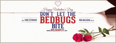 What's Bugging You on Valentine's Day? | Business And Marketing | Scoop.it