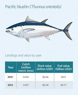 Overfishing puts $42bn tuna industry at risk of collapse | GarryRogers Biosphere News | Scoop.it