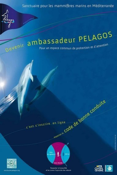 HYERES / «Devenir Ambassadeur PELAGOS» Pour un espace ... | Porquerolles - Tourisme | Scoop.it