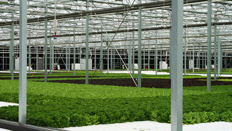 Will climate change move agriculture indoors? And will that be a good thing? | Sustain Our Earth | Scoop.it