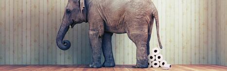Prague Zoo to Make Elephant Poo Paper   Prague by Czech Mates   Scoop.it