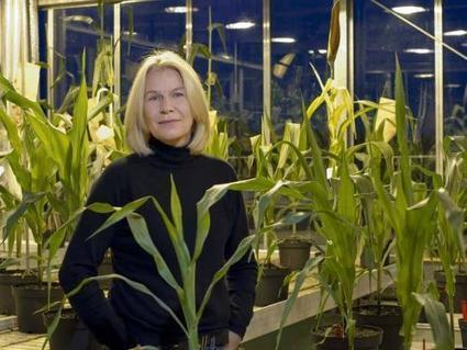 Germany: Synbreed project bridges the gap between animal and plant breeding | MAIZE | Scoop.it