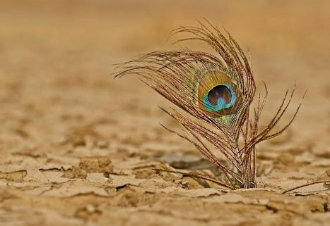Dry And Feather - Manan patel's image on Pixoto.com | Digital Photo Addicts | Scoop.it