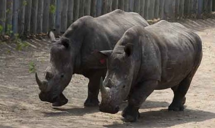 Rhino poacher shot dead in KZN - Eyewitness News   Help save our Rhinos   Scoop.it