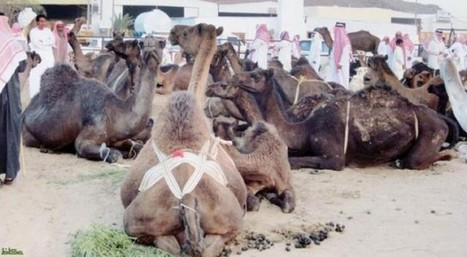 Global experts to address coronavirus conference - Saudi Gazette | MERS-CoV | Scoop.it