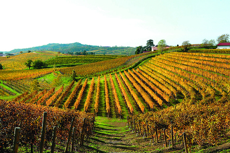 Think you know Pinot Grigio? - Decanter | In The Glass Wine and Spirits News | Scoop.it