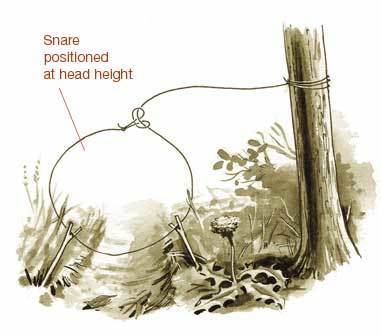 Six Primitive Traps For Catching Food In The Woods | BOB to BOL by BOV | Scoop.it