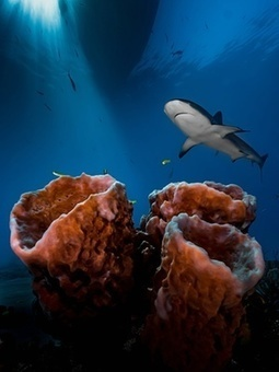 Underwater photographer of the year 2016 winners – in pictures | Healthy Waters | Scoop.it