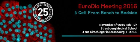 """EuroDia Meeting / symposium on """" β Cell: From Bench to Bedside """": November 4th 2016 Strasbourg 