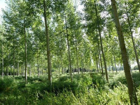 Relancer la filière bois, une proposition concrète | Filière bois - général | Scoop.it