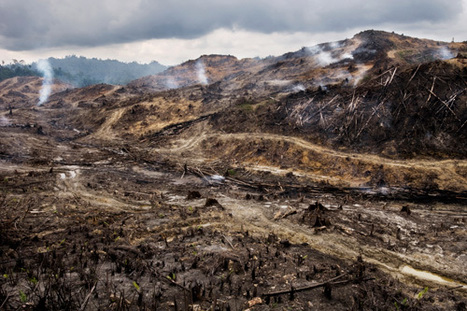 Major palm oil companies accused of ecocide, breaking ethical promises in Asia and Africa | safarious | Scoop.it