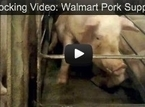 Speak Out Against Walmart's Cruelty to Pigs | Humanity | Scoop.it