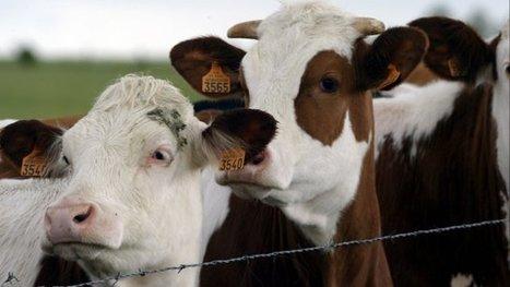 Terre de liens : acheter des fermes pour aider les jeunes agriculteurs à s'installer - France 3 Poitou-Charentes | S'installer en milieu rural | Scoop.it
