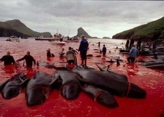 Scottish Town 'Untwins' With Faroe Islands Because of Whale Slaughter | PETA UK | Nature Animals humankind | Scoop.it