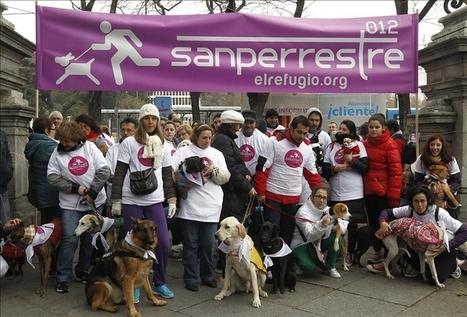 Cientos de madrileños y sus perros toman las uvas en Cibeles - Hola | Perros de hoy | Scoop.it