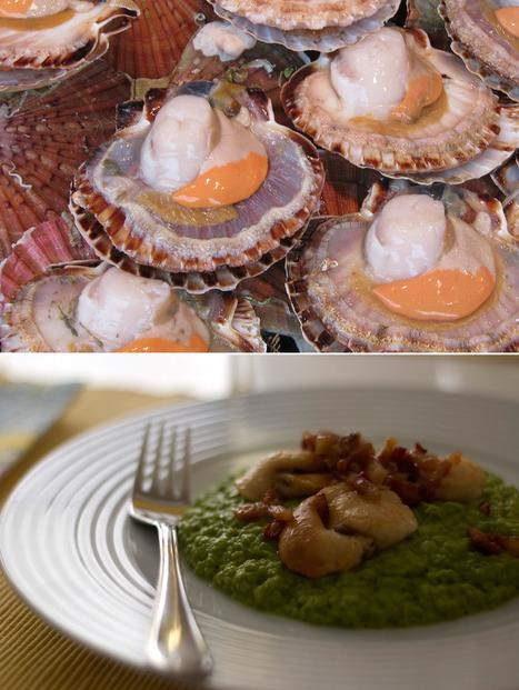 gourmets {amadores}: Vieiras com puré de ervilhas e bacon ou uma questão de linguagem | Foodies | Scoop.it