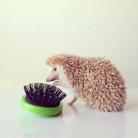 Meet Darcy the Hedgehog | Photography News Journal | Scoop.it