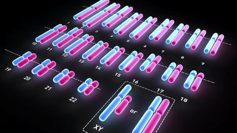 EUGÉNISME PROPRE : Le Comité d'éthique est favorable à un dépistage génétique de la trisomie 21 | Dépistage des maladies sur embryon | Scoop.it