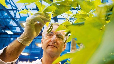 Bayer CropScience charting expansion in RTP - Triangle Business Journal | Triangle Real Estate Today! | Scoop.it