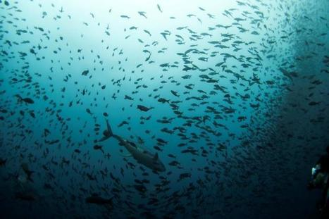 Ever wanted to track where your fish comes from? Now you can | Sustain Our Earth | Scoop.it