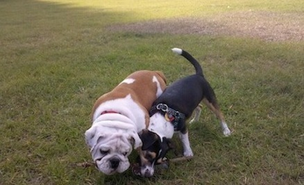 Do's and Don'ts of the Dog Park | Care2 Healthy Living | Ireland Travel | Scoop.it