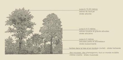 Comment et pourquoi planter une haie champêtre | Les colocs du jardin | Scoop.it